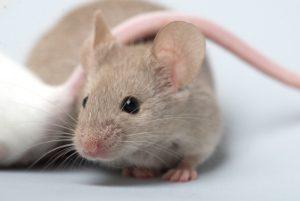 Ft Lauderdale Mice